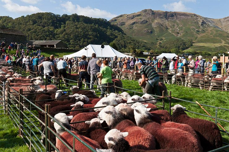 Borrowdale Shepherds' Meet 2016