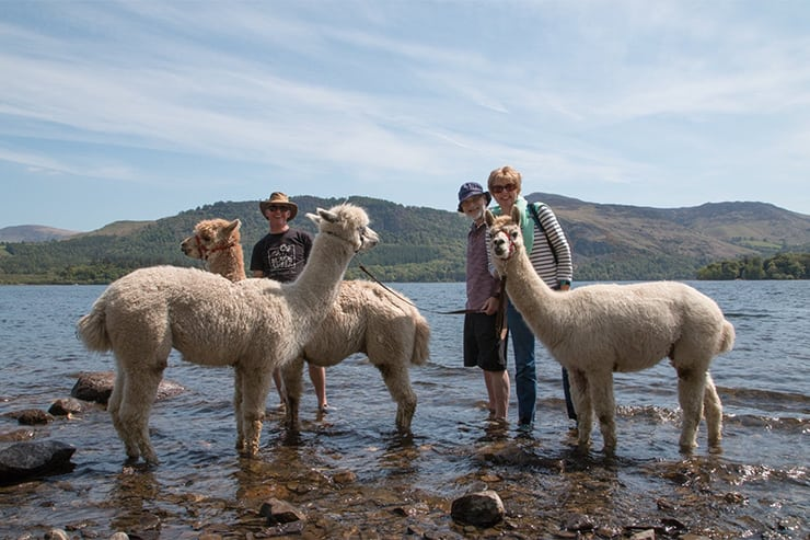 Alpacaly ever after, Keswick